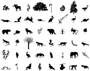 many animals and plants in vector