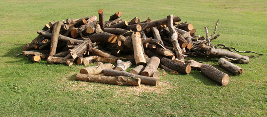 A Stack of Freshly Sawn Tree Logs and Wood.