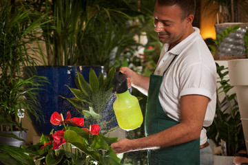 Florist is cleaning his plants