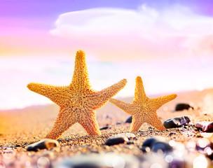 starfish on the seashore