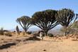 Nature of Lalibela Ethiopia - 78075903