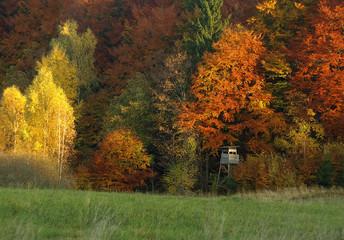 Vibrant autumn landscape