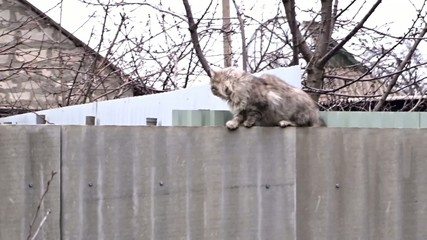 Beautiful fluffy cat on the fence