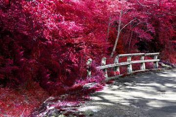Viajes por carretera.Naturaleza en otoño.Cuneta y valla