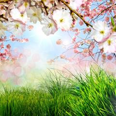 Frohe Ostern: Hintergrund mit Japanischen Kirschblüten :)