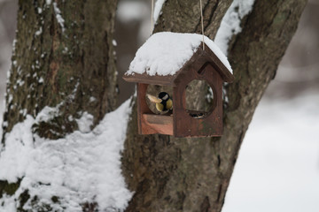 winter bird at the animal feeder with a piece of bread