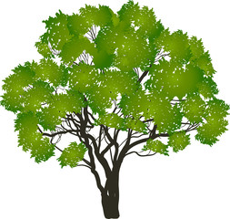 green isolated tree with many branches