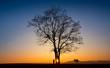 Leinwanddruck Bild - Abendlicht Baum