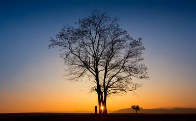 Abendlicht Baum