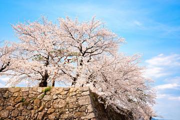 桜とお城の石垣