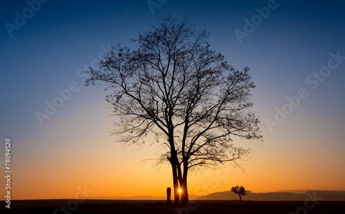 Leinwanddruck Bild Abendlicht Baum