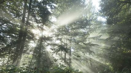 4K Time lapse tilt shot sun rays in a golden autumn forest