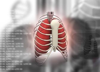 3d render of human rib .
