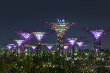 Night view of Gardens by the bay in Singapore