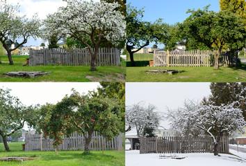alter Apfelbaum - vier Jahreszeiten