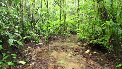 Open muddy clearing in Rainforest, Ecuador, after rain