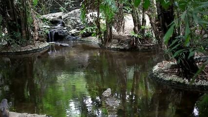 Big alligators at witarefall in pond. HD. 1920x1080