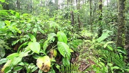 Pan across fallen tree trunks on the rainforest floor