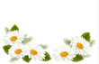Nature background with white beautiful flowers. Vector illustrat