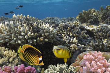 Ocean full of life. underwater coral reef