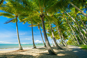 Palm trees on the beach of Palm Cove Australia