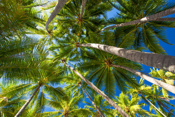 Low angle photo of palm trees on the tropical beach