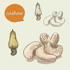 cashew nuts. vector sketches