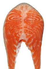 fresh raw salmon piece isolated on white background