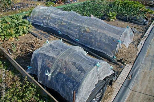 トンネル栽培 - 78108552