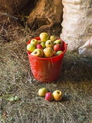 pail of assorted apples