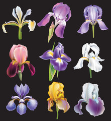 Set of Iris flowers