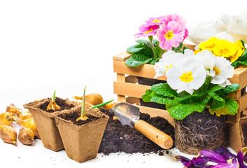 Primeln, Gartenarbeit, Frühlingsblumen