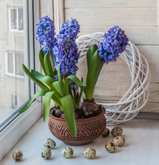 Easter composition on the windowsill of hyacinths