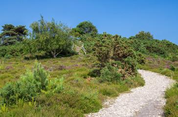 Heathland at Arne in Dorset, England