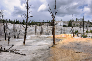 Yellowstone landscape with dead trees