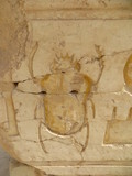 Fototapeta Scarab beetle