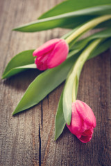 tulips  on wooden board