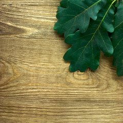 branch of oak tree leaves on wood background