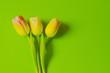 canvas print picture - drei Tulpen
