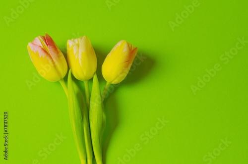 canvas print picture drei Tulpen