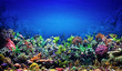 canvas print picture - Coral Reef
