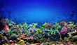 Leinwandbild Motiv Coral Reef