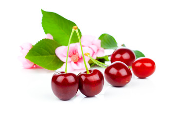 Sweet cherries with flowers, isolated on white background