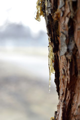 Resin adhesive on the trees.