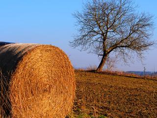 Baum und Strohrolle