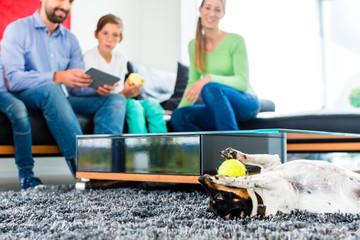 Familien Hund spielt im Wohnzimmer mit Ball