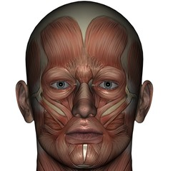 Muscle Face Light