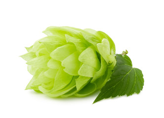 green hop isolated on the white background