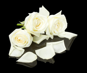 white roses on the black background