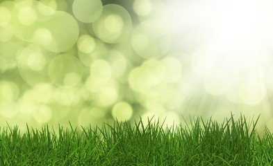 Grass on a defocussed green background